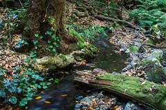 LaGomera2016 (yeray.ventura) Tags: bosque cedro paisaje naturaleza agua rio riachuelo corriente largaexposicin verde hdr