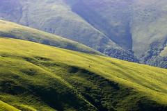 Полонина Боржава / Polonyna Borzhava (R@dekhiv) Tags: ukraine mountains carpathians polonyna borzhava landscape green hills zakarpattia україна украина гори горы карпати карпаты боржава краєвид пейзаж закарпаття