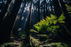 008 (Edinman ) Tags:       trail hiking