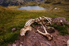 What the vultures have left over (Laurent Moose) Tags: laruns aquitainelimousinpoitoucharen frankreich aquitainelimousinpoitoucharentes