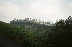 (elchaos) Tags: film rolleixf35 green tea munnar india 2013
