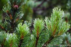 IMG_3425 (The Mitz Photography) Tags: gams grünersee hochschwab mariazell maryclan murmerl mädels nebel pilgern sommer steinbock wandern