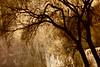 bohemia; memory (Timoleon Vieta II) Tags: winter tree sepia night river landscape roadtrip freeze memory 20 krumlov timoleon