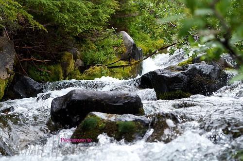 Mt. Rainier Summer 2012 33