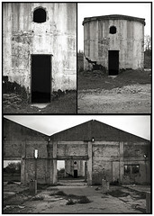 FATIGA DE MATERIALES / El Huapi III (ORANGUTANO / Aldo Fontana) Tags: 2005 chile blackandwhite blancoynegro dogs architecture arquitectura flickr nikond70 ruinas linares perros ladrillos viiregindelmaule orangutano aldofontana elhuapi