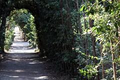 (laEmi) Tags: parco florence agosto firenze boboli labirinto vagabondo