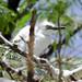 Uccelli verso la Pintada (2)