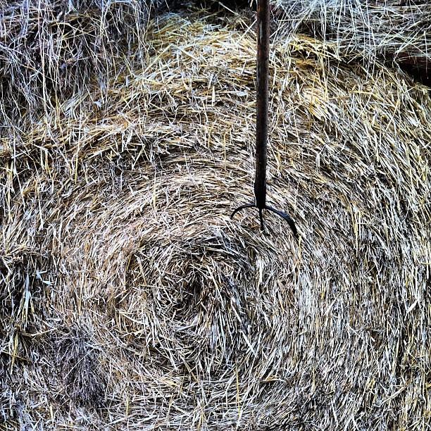 Natura/Cultura. L'erba che diventa fieno diventa rotonda. Come un tirassegno.