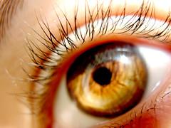 Eye (alyrees) Tags: iris brown black detail macro eye closeup gold eyes close lashes eyelashes hole eyebrow pupil brow