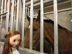 dolly and the dream of horses