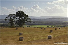 Harvest [Explored] (DMeadows) Tags: trees sky cloud field clouds rural landscape scotland countryside farm country farming harvest fields hay agriculture bales dumfries dumfriesandgalloway copse torthorwald davidmeadows dmeadows yahoo:yourpictures=yoursummer yahoo:yourpictures=yourbestphotoof2012