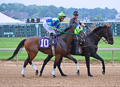 "2012-09-02 (145) r7 Xavier Perez on #10 Hong Kong Harry (JLeeFleenor) Tags: photos photography timonium statefair xavierperez marylandracing marylandhorseracing jockey جُوكِي ""赛马骑师"" jinete ""競馬騎手"" dżokej jocheu คนขี่ม้าแข่ง jóquei žokej kilparatsastaja rennreiter fantino ""경마 기수"" жокей jokey người horses thoroughbreds equine equestrian cheval cavalo cavallo cavall caballo pferd paard perd hevonen hest hestur cal kon konj beygir capall ceffyl cuddy yarraman faras alogo soos kuda uma pfeerd koin حصان кон 马 häst άλογο סוס घोड़ा 馬 koń лошадь bay md xman maryland"