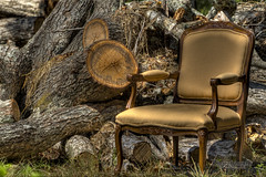 Family Reunion (photofriendly) Tags: wood pine project sticks chair dof logs bark needles hdr
