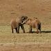 Dois elefantes enamorados