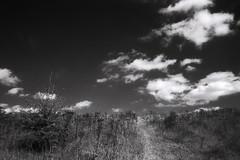 Hill (Saturated Imagery) Tags: sky blackandwhite slr film monochrome clouds 35mm dark ir hill leeds pip infrared redfilter microphen aireandcaldernavigation vivitar28mmf25 ilfordmicrophen konicair750 prakticatl5b developer:brand=ilford developer:name=ilfordmicrophen filmdev:recipe=8022