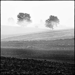 Two (warmianaturalnie) Tags: morning trees white mist black fog square landscape fields warmia
