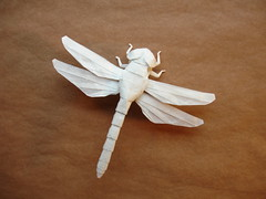 New Dragonfly (shuki.kato) Tags: paper insect origami dragonfly fold complex kato shuki