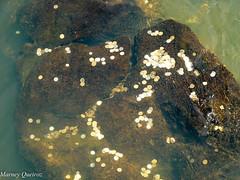 Pedra valiosa (Marney Queiroz) Tags: color nature cores do natureza foz iguacu colorido queiroz marney panasonicfz35 marneyqueiroz