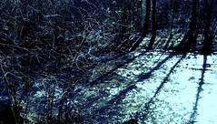 somewhere (LauraSorrells) Tags: blue light sky window water mystery creek march words stream shadows shine tag somewhere shining 2010 lightplay mypoetry talkingrock talkingrockcreek sundaysext