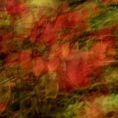 Autumn mood in impressionistic style (mennomenno.) Tags: autumn abstract motion le icm beweging herfstblad intentionalcameramovement