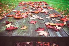 Foliage picnic (Becky~Sue) Tags: park autumn red leaves maple bokeh 2012 picnictable 3651 theweatherhasbeencrappyforoveraweek wegetonenicedayonfridayandthenitsbacktoyuck theysayitsoneofthebestyearsforfallfoliagebutnoonecanenjoyititssogreyanddreary