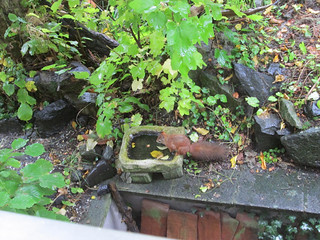 Eichhörnchen (Belegbild), NGID486943702