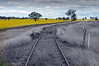 canola_edited-1.jpg (G Ross Photography.) Tags: conola