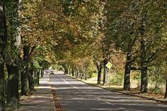 Autumn street (green_lover) Tags: street autumn trees fall town vanishingpoint hometown horsechestnut yrardw