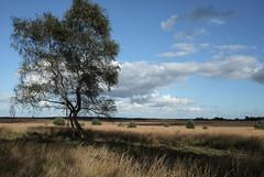 Veluwe-Roosendaalse veld (JanKuba) Tags: veluwe