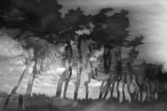 Untitled122_2016 (Jonny Bell) Tags: jonnybell icm multipleexposures blur landscape trees movement suffolk ramsholt