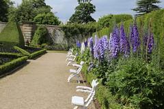 Delphiniums (NZGandG) Tags: yorkshire castlehoward garden delphinium york