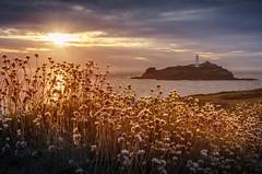 Godrevy Island, Cornwall (DM Allan) Tags: godrevy island cornwall westpenwith sunset seaside lighthouse nationaltrust golden