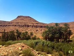 Petite palmeraie  Founassa (Ath Salem) Tags: algrie bchar naama ain sefra dsert sahara dunes sables beni ounif figuig hamada      promenade tourisme dcouverte