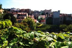 TS (giacomarco1981) Tags: ts trieste citt city cityscape italia friuliveneziagiulia verde green bokeh