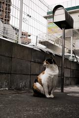 neko-neko1510 (kuro-gin) Tags: cat cats animal japan snap street straycat  sigma dp2
