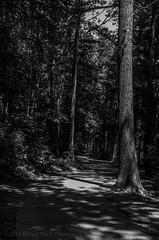05/52 The Long and Winding Road (Doug.Mall) Tags: dogwood52 52weeks apexcommunitypark bw challenge landscape photochallenge blackandwhite northcarolina usa