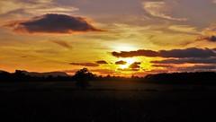 Fields of Gold (Sundornvic) Tags: shropshire sunset sun shine clouds sky pentaxart skyscenes tree silhouette fields