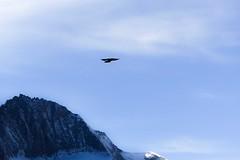 DSC03596 (frame=photo) Tags: bird mountain single grossglockner