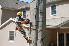 Willow Tree & Landscaping Services : Tree Trimming Service in Bucks County (willowtree9) Tags: tree trimming bucks county