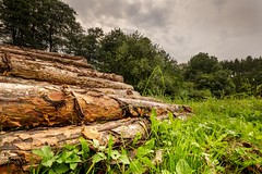 Stacked pine logs on a meadow (tomaskriz1) Tags: moravian czech clouds grass meadow working treetrunk tree plant photography outdoors europe nopeople nature naturalphenomenon lumberindustry horizontal growth economy deciduoustree day colorimage arrangement woodpile industry deforestation woodland stack log forest
