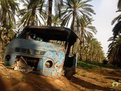 Carcasse d'un vieux camion abandonn dans la palmeraie de Hobba (Ath Salem) Tags: algrie paysage tourisme dcouverte    palmeraie hobba eloued souf sable blanc sahara est irrigation palmier   coupole