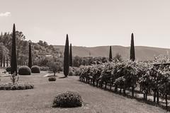 Landscape Provence (x1klima) Tags: bonnieux provencealpesctedazur frankreich fr landscape nature landschaft natur himmel sky clouds wolken vine vin vineyard viniculture vino view wein weinberg weinbau weinstock weinberge weinstcke wine agriculture winemaker winzer sonya7r ilce7r zeiss sonarfe55mmf18za sonnartfe1855