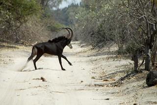 Namibia Dangerous Game Safari - Caprivi Strip 46