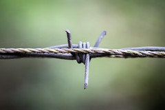 Barbed Wire (B Hutchison) Tags: xt1 dunkeld wire cable metal spike textile barbed