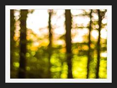 Septembermorgen im Wald (Vintage lens lover) Tags: bokeh wald september morgens herbst sptsommer em1 zuiko50mm14 abstrakt