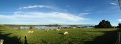 Sun, Sheep and Shadows (RoystonVasey) Tags: roaming email upload