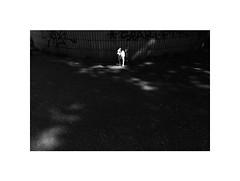 Doggy Stardust (Marek Pupk) Tags: central europe slovakia bratislava dog animal blackandwhite monochrome bw digital apple iphone 5s smartphone documentary city street