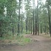 Flagstaff Campgrounds