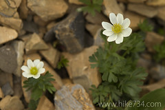 "Anemone • <a style=""font-size:0.8em;"" href=""http://www.flickr.com/photos/63501323@N07/7890553144/"" target=""_blank"">View on Flickr</a>"