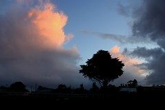 Tree (LittleMok - Lois) Tags: street winter sunset tree clouds railway australia victoria queenscliff hesse 30aug12